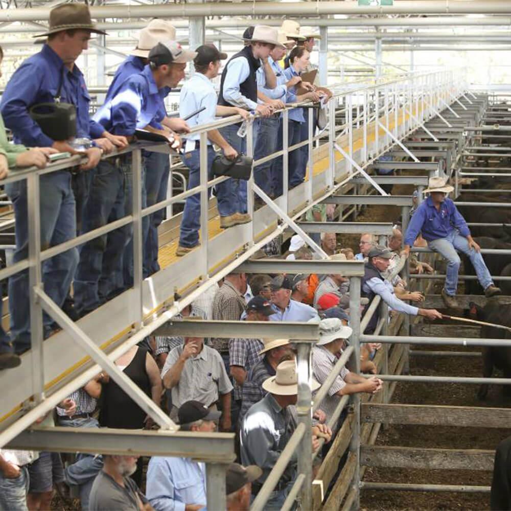 KOMBI Platforms installed at Livestock Yards